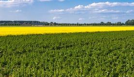 błękitny składu zieleni kolor żółty Zdjęcia Stock