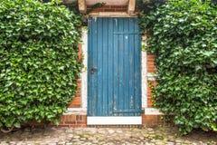 Błękitny stary drewniany drzwi budujący otaczającym bluszczem w kamiennej ścianie dłonie sceny lata słońca fale Zdjęcia Royalty Free