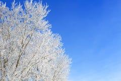 błękitny struktura marznąca nieba drzew biel zima biały nieb błękitny marznący drzewa Zdjęcie Royalty Free