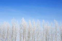 błękitny struktura marznąca nieba drzew biel zima biały nieb błękitny marznący drzewa Fotografia Royalty Free