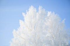błękitny struktura marznąca nieba drzew biel zima biały nieb błękitny marznący drzewa Obraz Stock