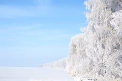 błękitny struktura marznąca nieba drzew biel zima biały nieb błękitny marznący drzewa Zdjęcia Royalty Free