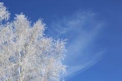 błękitny struktura marznąca nieba drzew biel zima biały nieb błękitny marznący drzewa Fotografia Stock