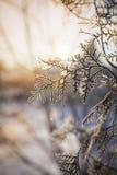 błękitny struktura marznąca nieba drzew biel zima gałąź marznący drzewo Zdjęcia Royalty Free