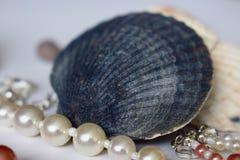 Błękitny sznurek białe perły i skorupa zdjęcia stock