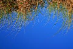 błękitny tło trawa Zdjęcie Royalty Free
