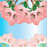 Błękitny tło z kwiatami Obrazy Stock