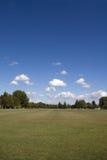 błękitny trawy zieleni nieba drzewa Zdjęcia Stock