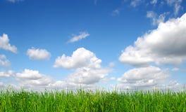 błękitny trawy zieleni niebo Zdjęcia Stock