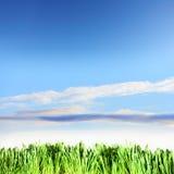błękitny trawy zieleni niebo Zdjęcie Royalty Free