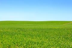 błękitny trawy zieleni niebo Zdjęcia Royalty Free