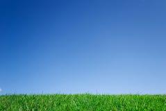 błękitny trawy zieleni niebo Obrazy Royalty Free