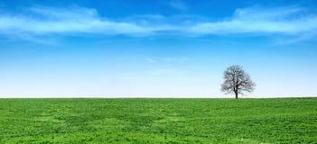 błękitny trawy zieleni panoramy niebo Obraz Royalty Free