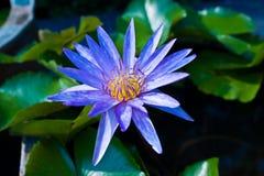 Błękitny vergin światło Zdjęcia Royalty Free