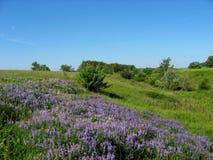 Błękitny wąwóz - niebieskie niebo Obraz Stock