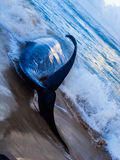 błękitny wieloryb Obrazy Royalty Free