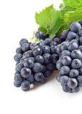 błękitny winogron zielony liść Zdjęcie Royalty Free