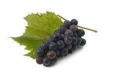 błękitny winogrono Zdjęcia Stock