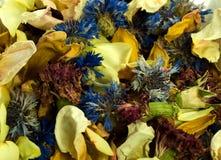 błękitny wysuszony kwiatów potpourri kolor żółty Obraz Stock