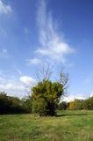 błękitny zieleń Obraz Stock