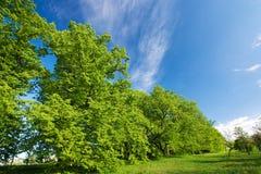 błękitny zieleni wapna nieba drzewo Zdjęcia Royalty Free