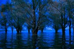 błękitny zimna przerażająca Danube delta zalewający las Zdjęcia Stock