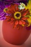 błękitny zinnias Fotografia Stock