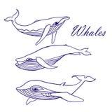 Błękitnych wielorybów nakreślenia Doodle wektor Obrazy Stock