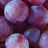Błękitnych winogron makro- widok obrazy stock