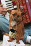 błagał, pies Zdjęcia Royalty Free