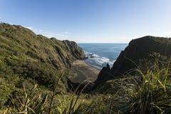 Bławatnika Podpalany zachodnie wybrzeże Auckland obraz royalty free