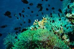 Błazen ryba z swój potomstwami w anemonowym miejscu fotografia royalty free
