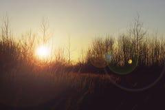 Błogi jesień zmierzch nad horyzontem zdjęcia royalty free