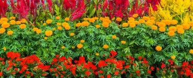 Błogi kwiatu łóżko Zdjęcie Stock