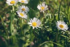 Błogość wiosna Zdjęcie Stock