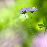 Błogość wiosna Fotografia Royalty Free