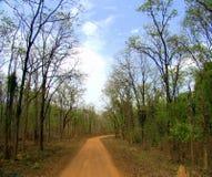 Błotnista dżungli droga Obraz Royalty Free