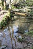 Błotnisty stawowy odbicie po powodzi zdjęcie stock