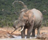 błoto spryskiwanie słonia Obrazy Royalty Free