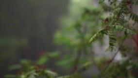 Błyskawica iluminuje liście Rowan zbiory
