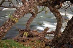 błyskawiczny strumień Fotografia Stock