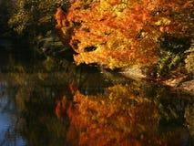 błyskotliwość jesienią Obrazy Royalty Free