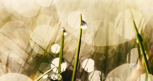 Błyszcząca mokra trawa w jesieni zdjęcie wideo