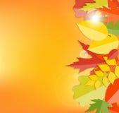 Błyszczącej jesieni liści Naturalny tło wektor Zdjęcie Royalty Free