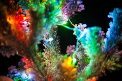 Błyszczący światła naturalna choinka zakrywająca Obraz Stock