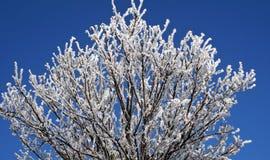 Błyszczący, mroźny ranek, Śnieżne nakrywkowe gałąź w zimie Zdjęcie Royalty Free