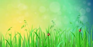 Błyszczący trawa gazon z światło słoneczne skutka wektoru tłem ilustracja wektor