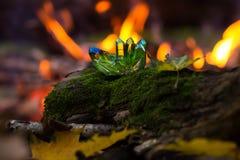 Błyszczący zieleni magiczni kryształy w lesie zdjęcia stock