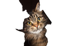 b查出的猫漏洞查找纸白色 库存图片