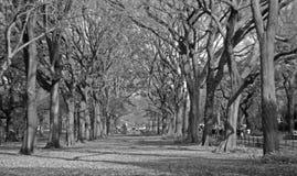 B&w de los árboles Foto de archivo libre de regalías